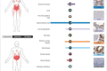 新冠病毒影响肾脏和男性生殖系统,新冠病毒的两个潜在目标:肾脏与睾丸。缩略图